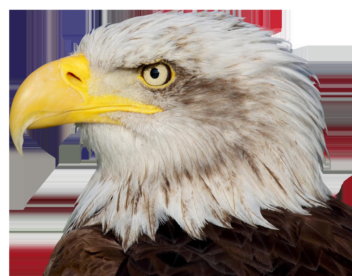 eagle - Win Win Business & Tax Solutions International, LLP.